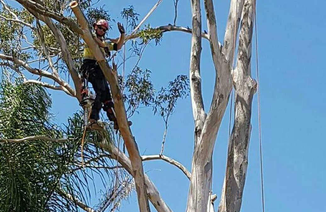 What-Is-An-Arborist