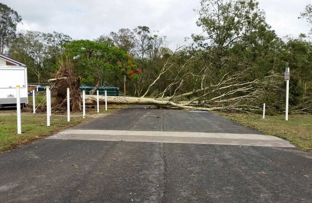 Are Your Trees Safe? Storm Season Is Near!