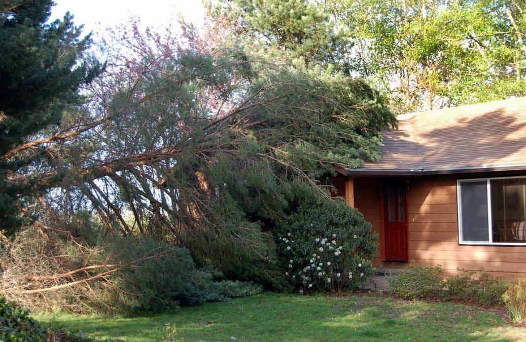 Tree-fallen-on-house