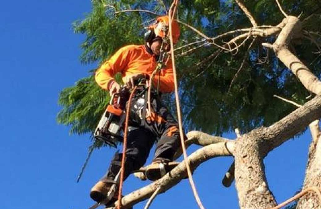Why Should I Choose Qualified Arborists For My Next Job?