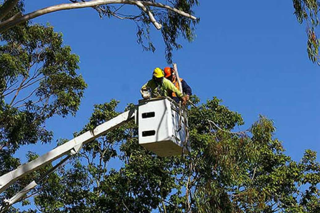 Tree Thinning – Why do it?