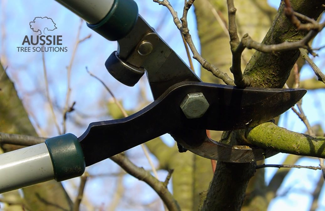 Aussie Tree Solutions Tree Trimming Tips Every Home Owner Should Know