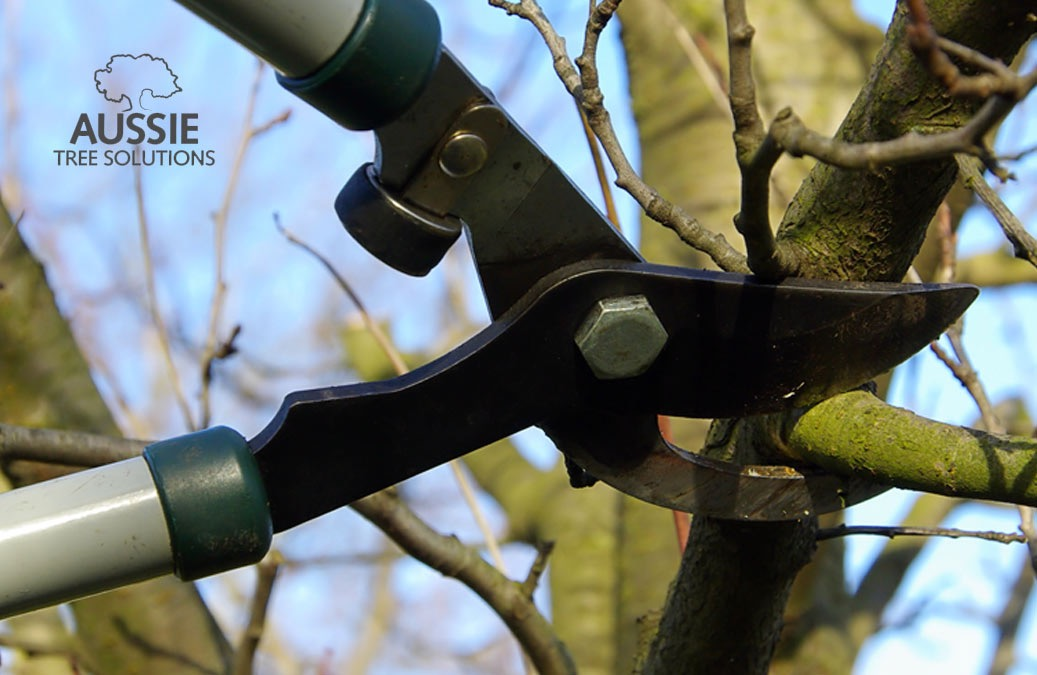 Tree Trimming Tips Every Home Owner Should Know