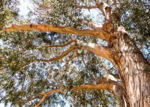 Aussie Tree Solutions Why Tree Trimming Is A Responsibility, Not A Choice