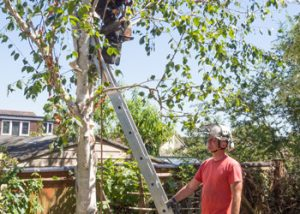 Aussie Tree Solutions Secure Your Partner