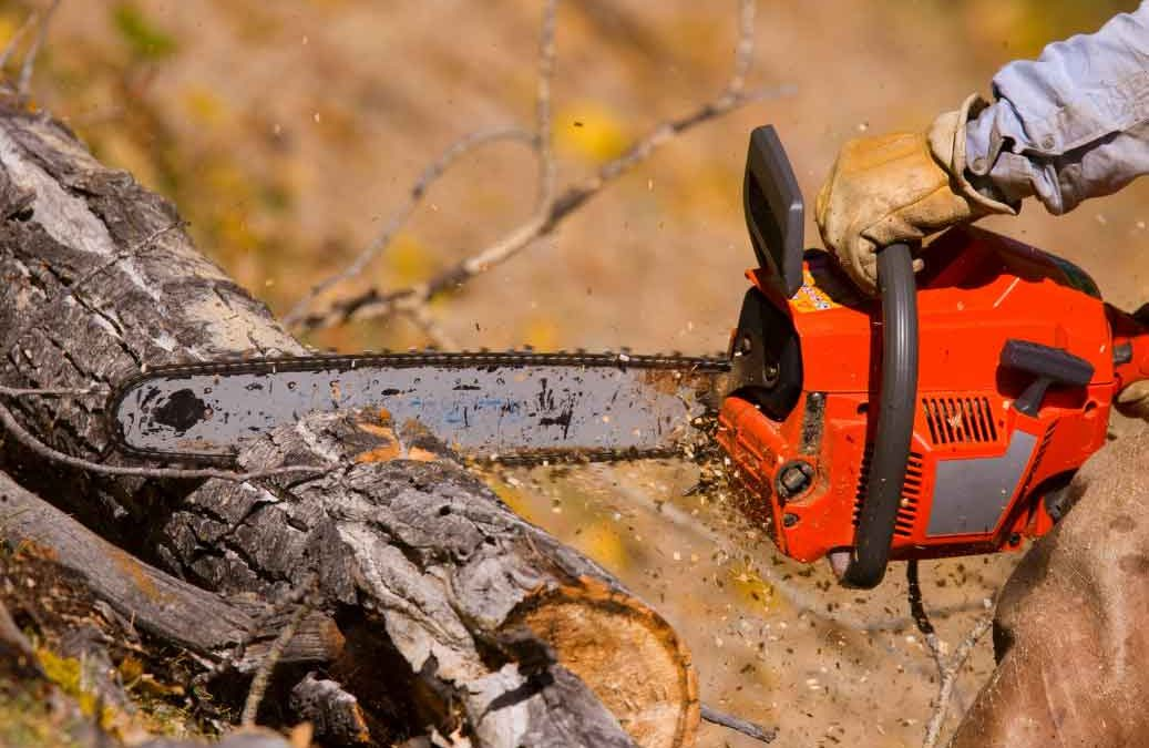 What To Look For In A Tree Lopping Company