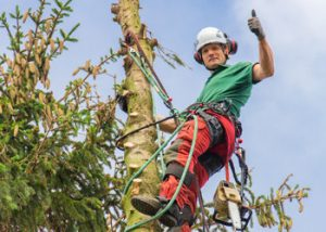 Aussie Tree Solutions Hire A Professional