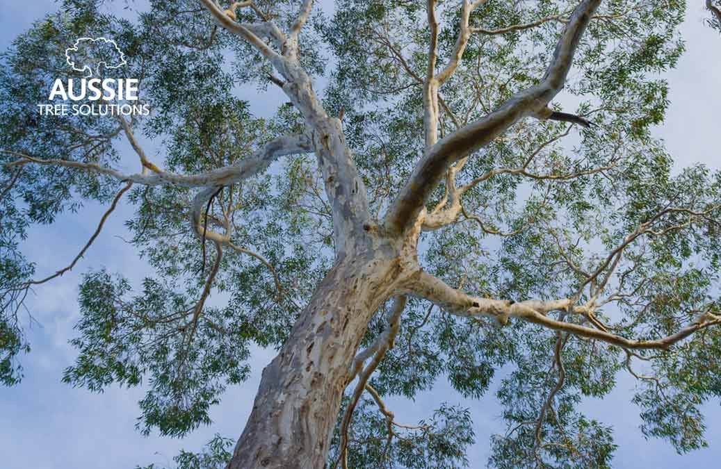 Aussie Tree Solutions The Ultimate Tree Trimming Guide For Beginners