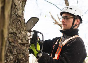 Aussie Tree Solutions Hiring The Professionals