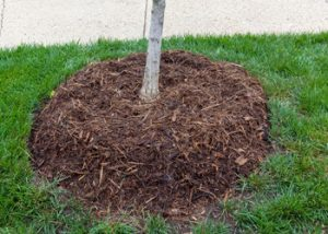 Aussie Tree Solutions Mulch
