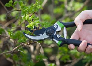 Aussie Tree Solutions Prune