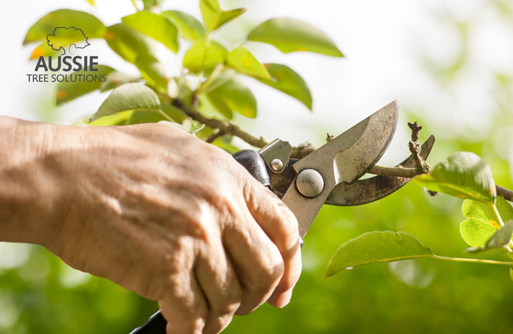 Aussie Tree Solutions 7 Common Tree Pruning Mistakes To Avoid