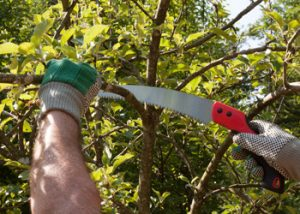 Aussie Tree Solutions Cutting At The Trunk