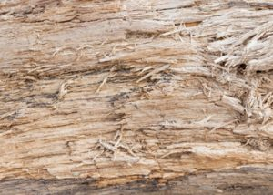 Aussie Tree Solutions Damaging The Bark