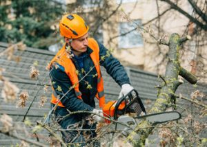 Aussie Tree Solutions Get Pros On Your Team