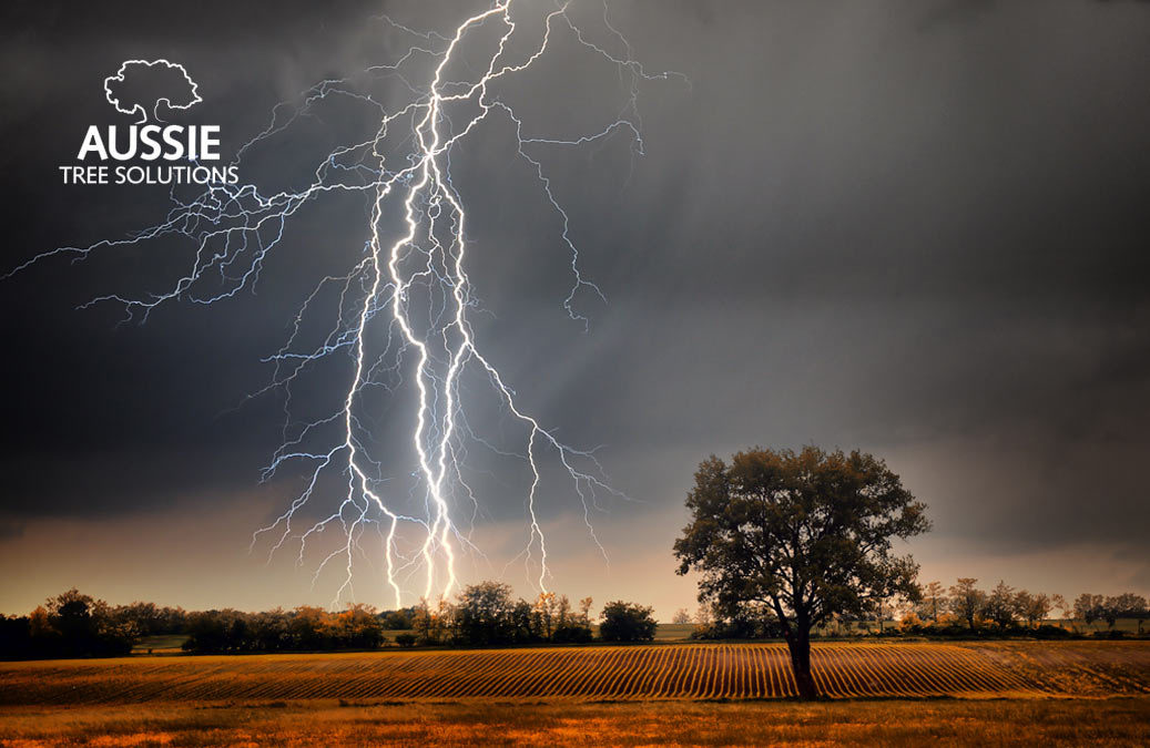 Aussie Tree Solutions How To Protect Your Trees From Future Storm Damage