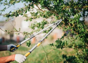 Aussie Tree Solutions Prune Strategically