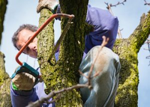 Aussie Tree Solutions Taking Out The Largest Branches