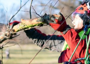 Aussie Tree Solutions Get A Pruning Professional