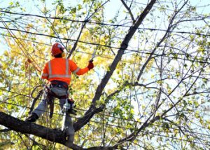 Aussie Tree Solutions Trained And Experienced