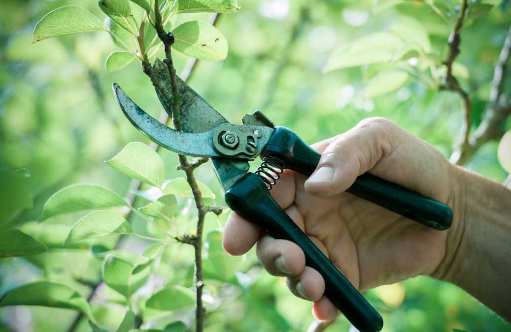 Spring Tree Care And Gardening Tips