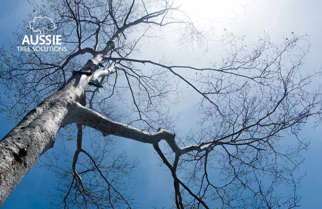 Common Tree Care Mistakes To Avoid
