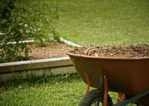 Aussie Tree Solutions Get Your Organic Forest Mulch
