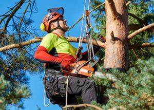 Aussie Tree Solutions Hire A Professional Arborist