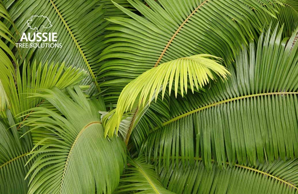 Top Palm Tree Cleaning & Maintenance Tips