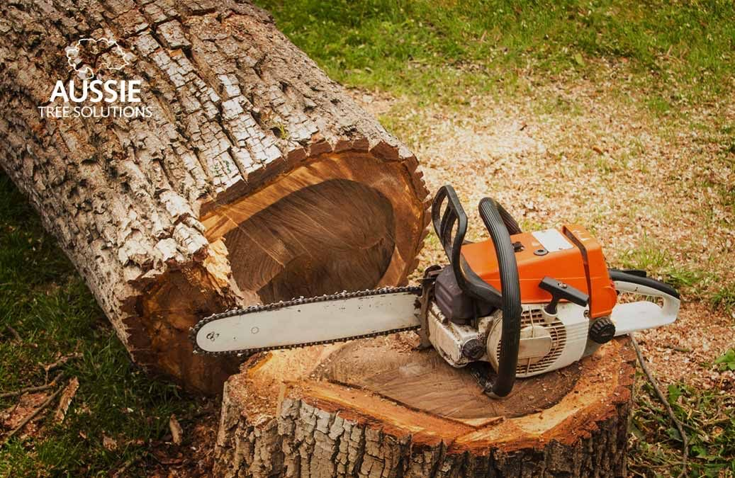 Successful Tree Removal: DIY Tips For The Home Gardener