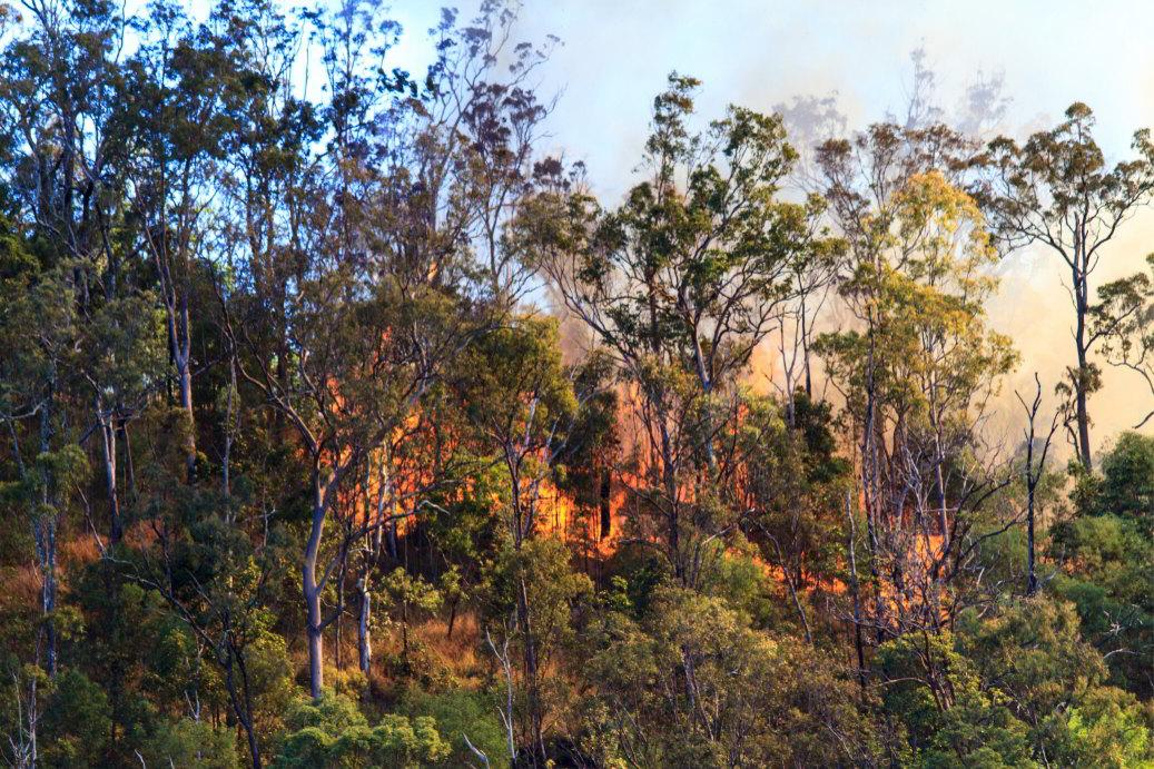 Is Your Backyard Bushfire Ready?