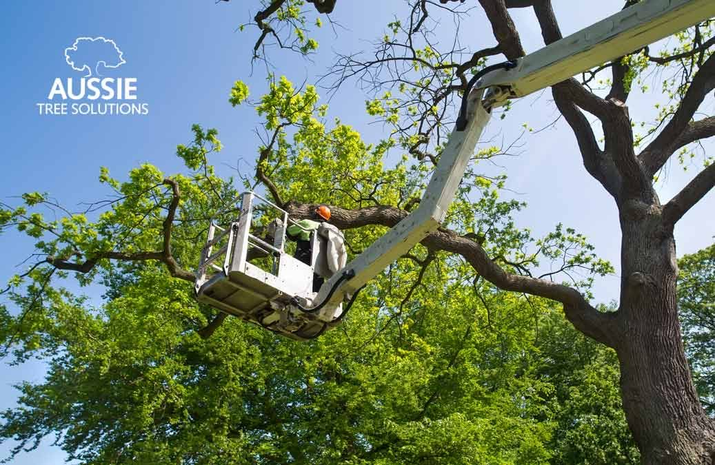 When Should I Hire An Arborist In Brisbane?