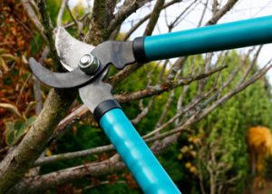 Aussie Tree Solutions Tree Removal And Pruning