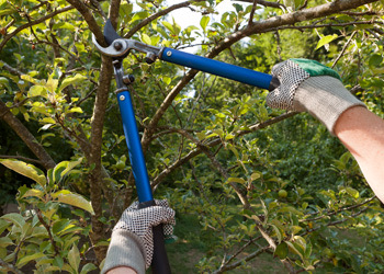 Aussie Tree Solutions Pruning