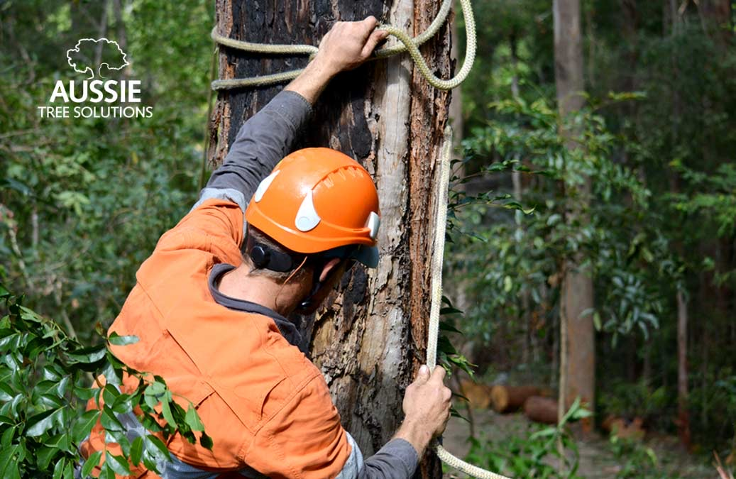 What Does A Certified Arborist Do?