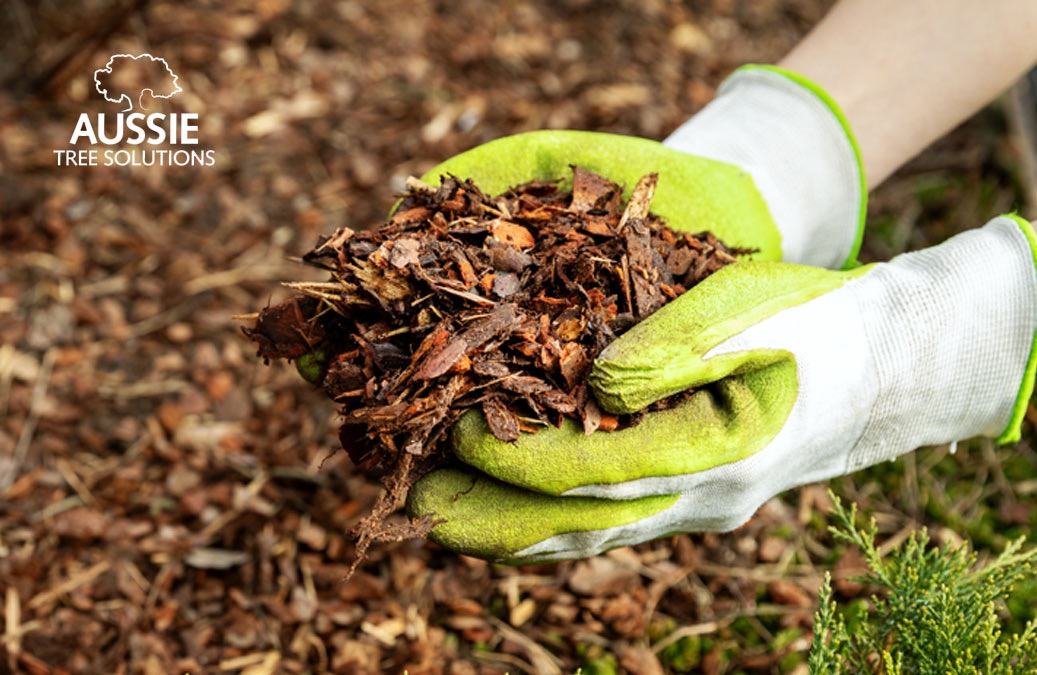 Aussie Tree Solutions Mulching 101 Top Tips To Keep Your Garden Looking Its Best