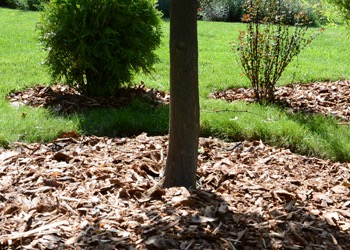 Aussie Tree Solutions Mulching Do's And Don'ts