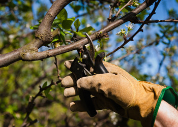 Aussie Tree Solutions Arborists Brisbane Get Your Trees Pruned