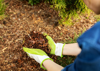 Aussie Tree Solutions Arborists Brisbane Use Mulch