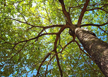 Aussie Tree Solutions Consulting Qualified Consulting Arborists