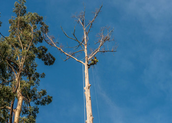 Aussie Tree Solutions The Right Choice