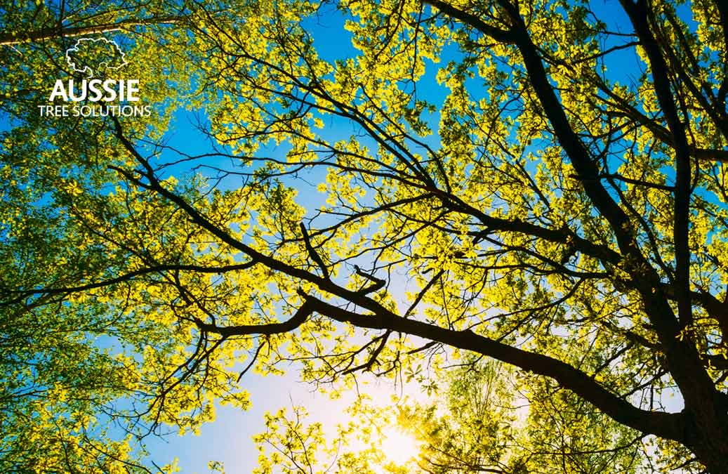 Aussie Tree Solutions Essential Spring Care Tips For Strong Healthy Trees
