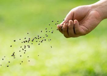 Aussie Tree Solutions Fertilizer