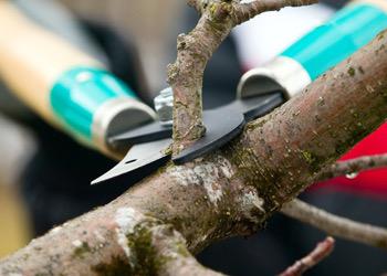 Aussie Tree Solutions Prune