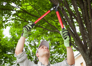 Aussie Tree Solutions What Is Pruning