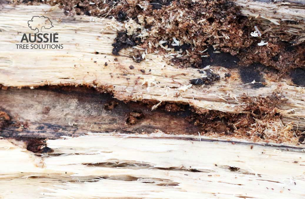 Common Backyard Tree Diseases And Pests In Brisbane