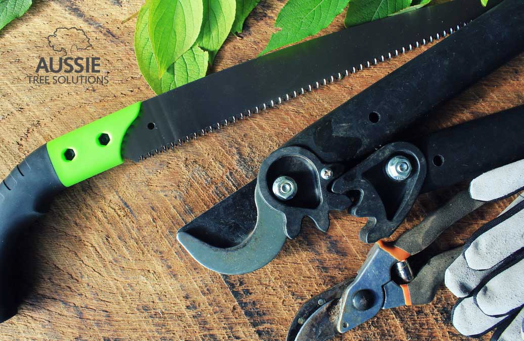 Aussie Tree Solutions Essential Tree Pruning Tools And Tips