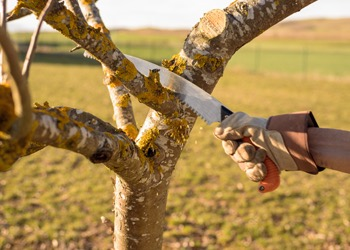 Aussie Tree Solutions Must Have Tree Pruning Tools