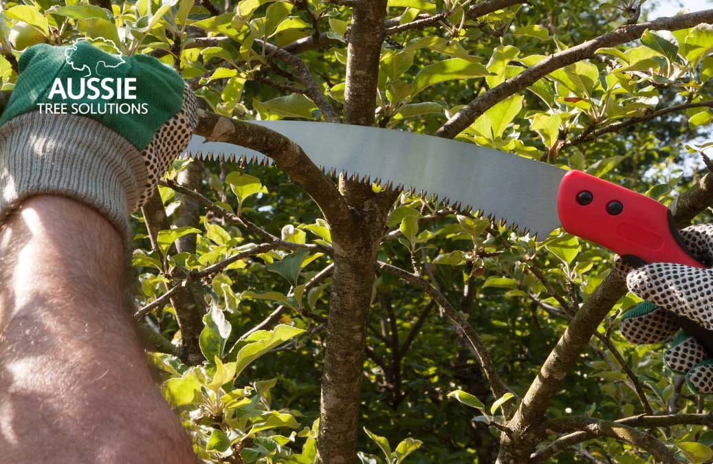 Aussie Tree Solutions Tree Lopping And Pruning Tips From The Professionals