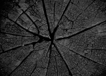 Aussie Tree Solutions Burning The Stump